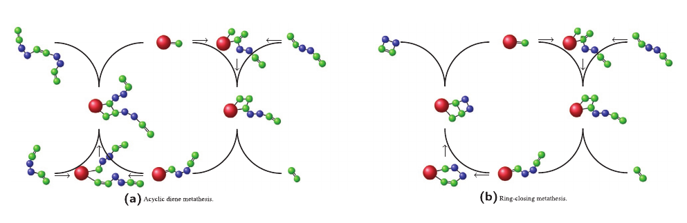 The Presence of a Wall Enhances the Probability for Ring‐Closing Metathesis: Insights from Classical Polymer Theory and Atomistic Simulations
