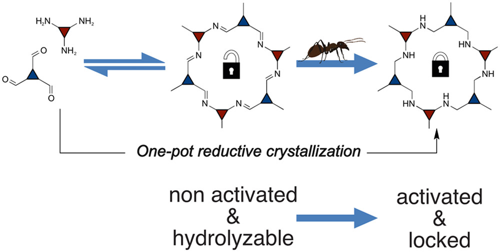 Amine-Linked Covalent Organic Frameworks as a Platform for Postsynthetic Structure Interconversion and Pore-Wall Modification