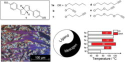 Phase behaviour of alkynyl-terminated bicyclo[3.3.0]octa-1,4-diene ligands: a serendipitous discovery of novel calamitic liquid crystals